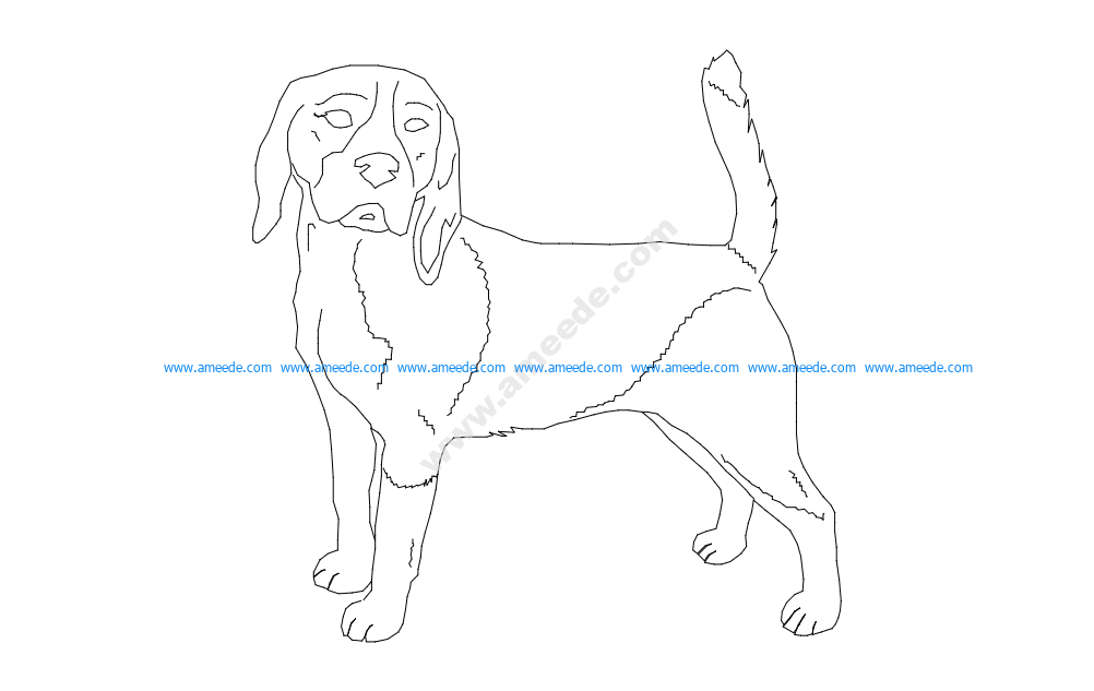 Beagle good 2