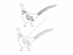 Birds walking
