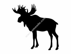 Elk (1)