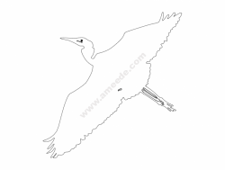 egret-flyby-outline-ba
