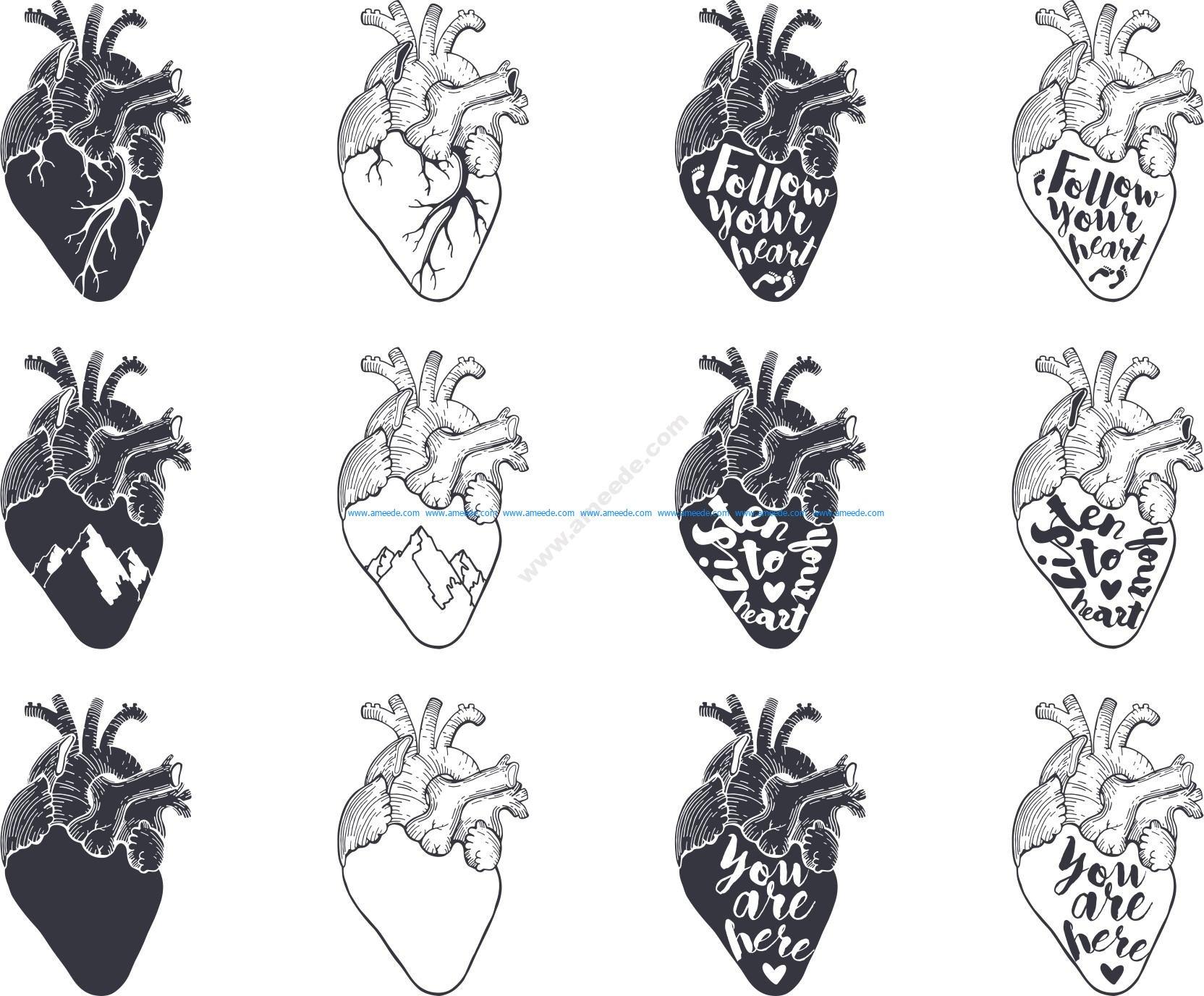 Heart Vector Set