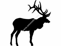Large Bull Elk Olen