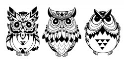 Owls Vector Art