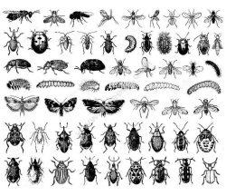 Insectes difficil
