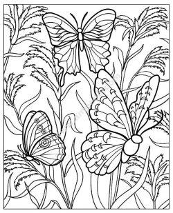Papillons plantes