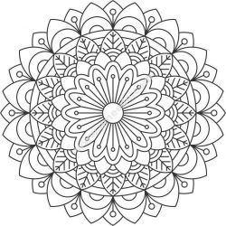 Chrysanthemum pattern