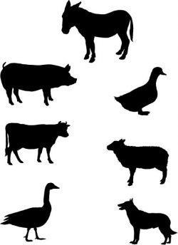 Sketches of animals commonly seen on farms