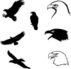 The eagle pattern is an indispensable symbol of power
