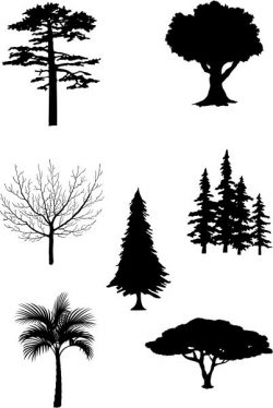 Tree collection of pictures