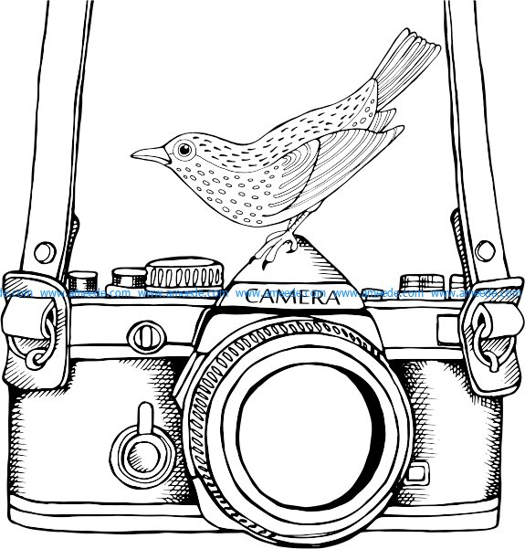 an old camera and a nightingale