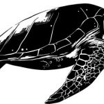 Old sea turtle file cdr and dxf free vector download for print or laser engraving machines