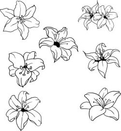 beautiful lilies file cdr and dxf free vector download for laser engraving machines