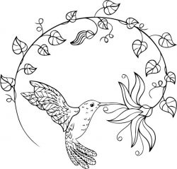 Hummingbirds suck nectar  file cdr and dxf free vector download for print or laser engraving machines
