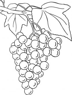 boss grape file cdr and dxf free vector download for print or laser engraving machines