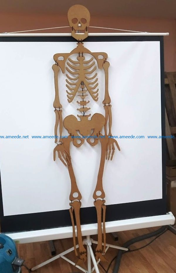 skeleton file cdr and dxf free vector download for Laser cut