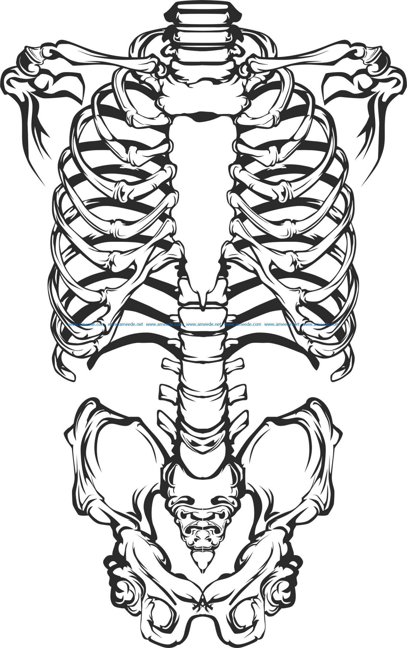skeleton file cdr and dxf free vector download for print or laser engraving machines