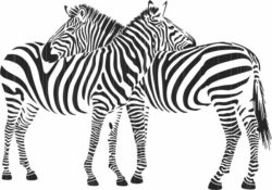 Two zebras file cdr and dxf free vector download for print or laser engraving machines