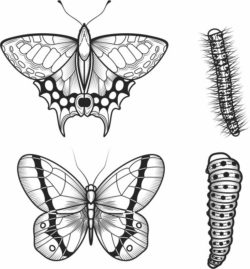 Caterpillars and butterflies file cdr and dxf free vector download for laser engraving machines