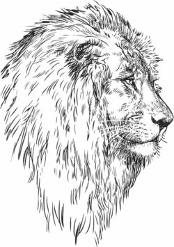 Face lion  file cdr and dxf free vector download for laser engraving machines