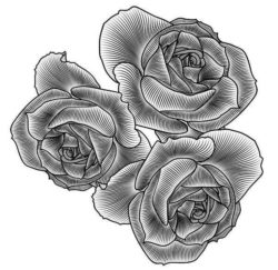 three roses file cdr and dxf free vector download for laser engraving machines