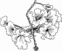 Flowers grow from twigs file cdr and dxf free vector download for laser engraving machines