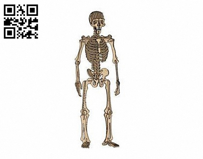 Human Skeleton E0011238 file cdr and dxf free vector download for Laser cut