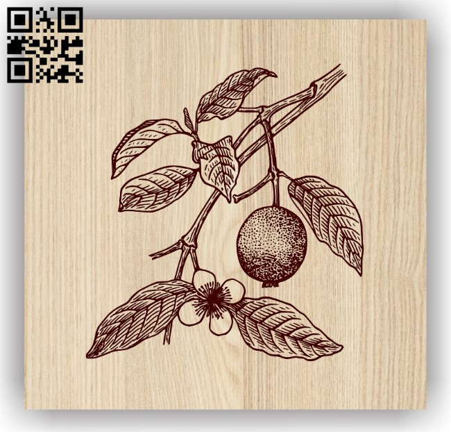 Guava E0013919 file cdr and dxf free vector download for laser engraving machine