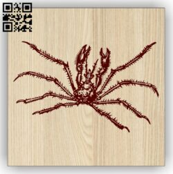 Spider E0013761 file cdr and dxf free vector download for laser engraving machine